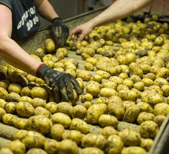 loupane-brambory-frycovice-kublak
